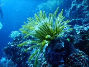 sea-plant